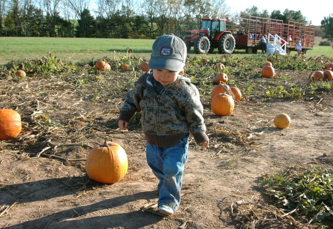 Pumpkin patch6