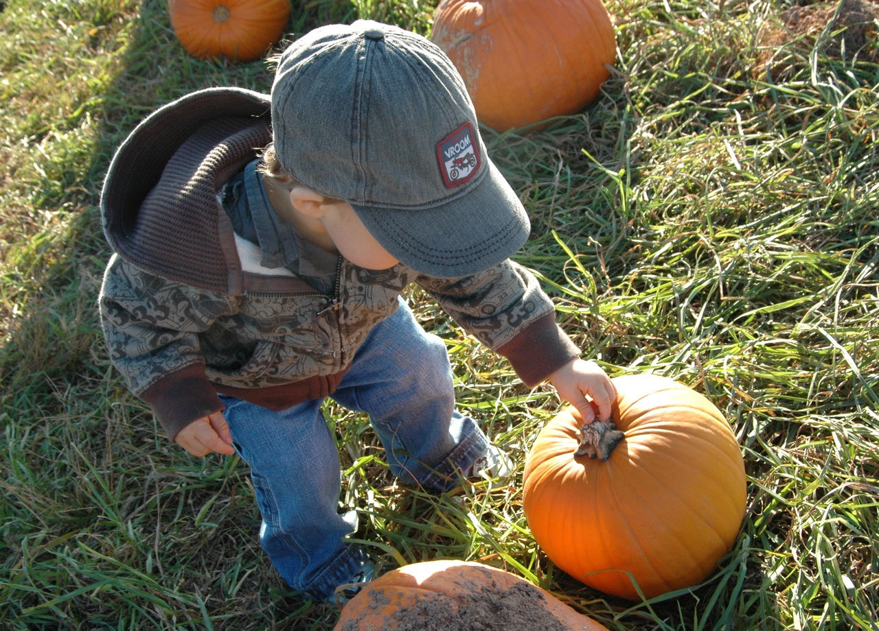 Pumpkin patch5