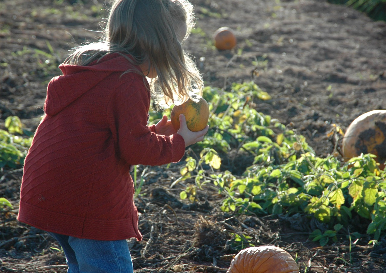 Pumpkin patch7