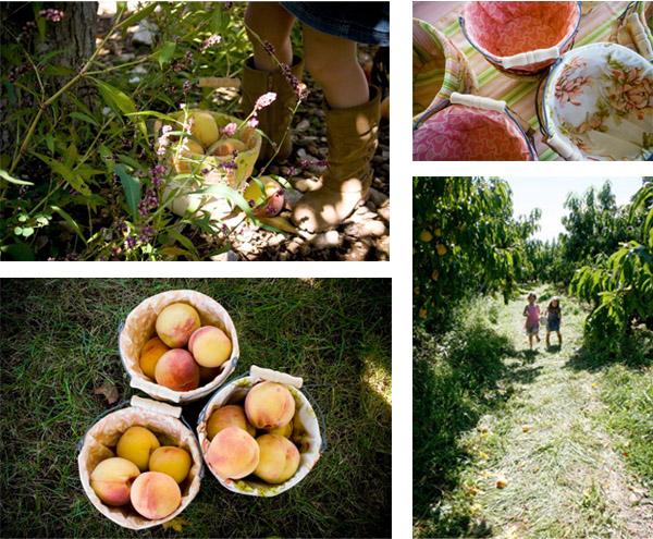 Peach collage 1