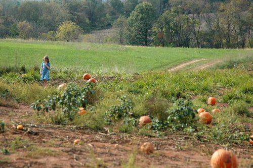 Fall pumpkins 4
