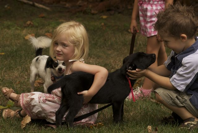 Puppy party 34
